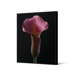 Obraz z różowym kwiatem TOIR26568