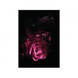 Nowoczesny obraz z różą TOIR25601 dwa rozmiary